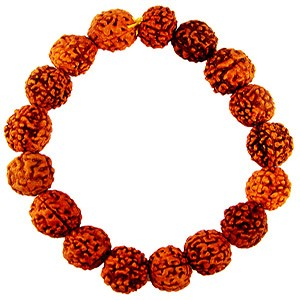 5-faced rudraksh beads, worn as a lucky charm bracelet.