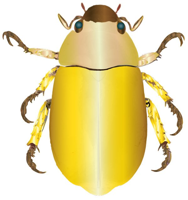 An Egyptian scarab beetle
